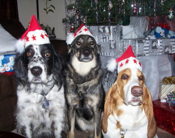 Molly, Murphy, and Max are the Best Holiday Dog Photo Contest winners 2007