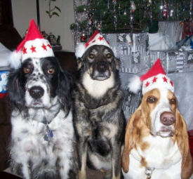 Winner Best Holiday Dog Pictures